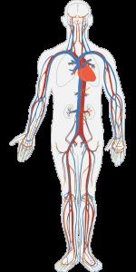 USG Doppler tętnic szyjnych i kręgowych